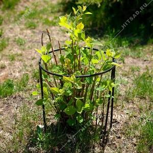 Опора для растений 57-907